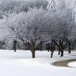 snevejr
